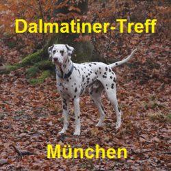 Dalmatiner-Treff München